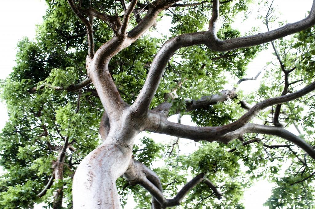 Tree by Annelies Verhelst