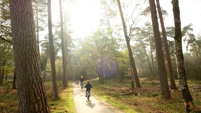 The Magic of Forest Bathing: Why Being in the Woods Benefits Your Health  The Health Sessions