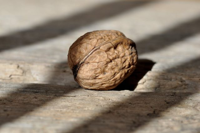 5 Brain Foods to Boost Your Memory and Focus | The Health Sessions